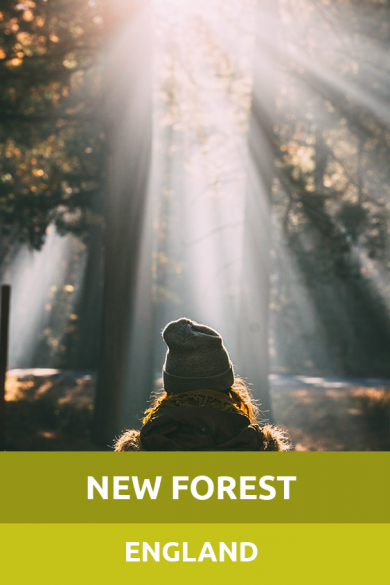 NewForest England Sensory Traveller Holidays