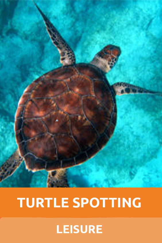 Leisure Turtle Spotting Sensory Traveller Holidays