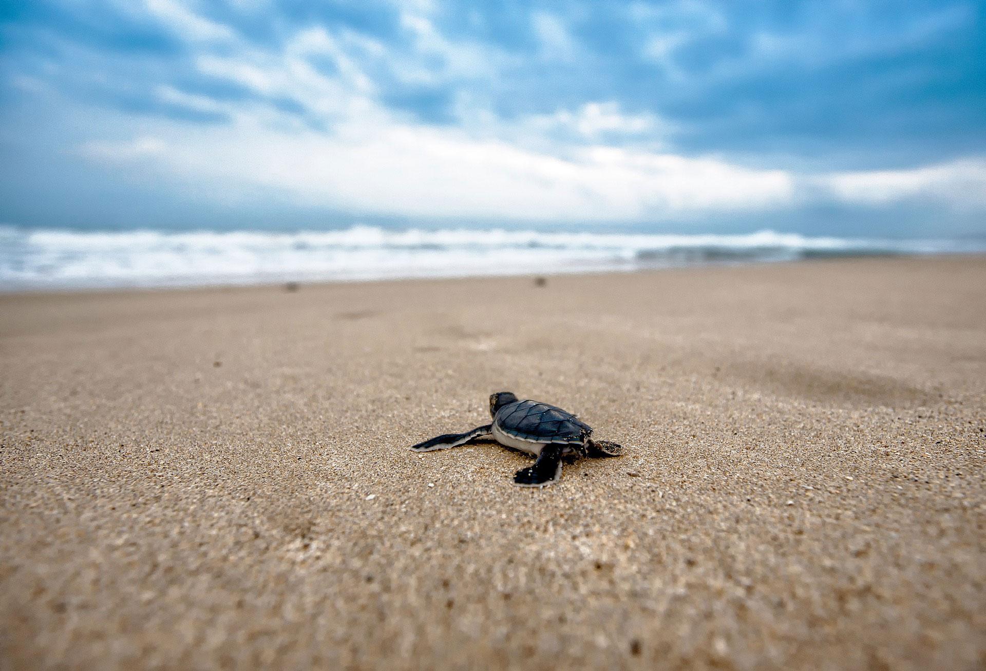 Turtle Spotting Sensory Traveller Holidays