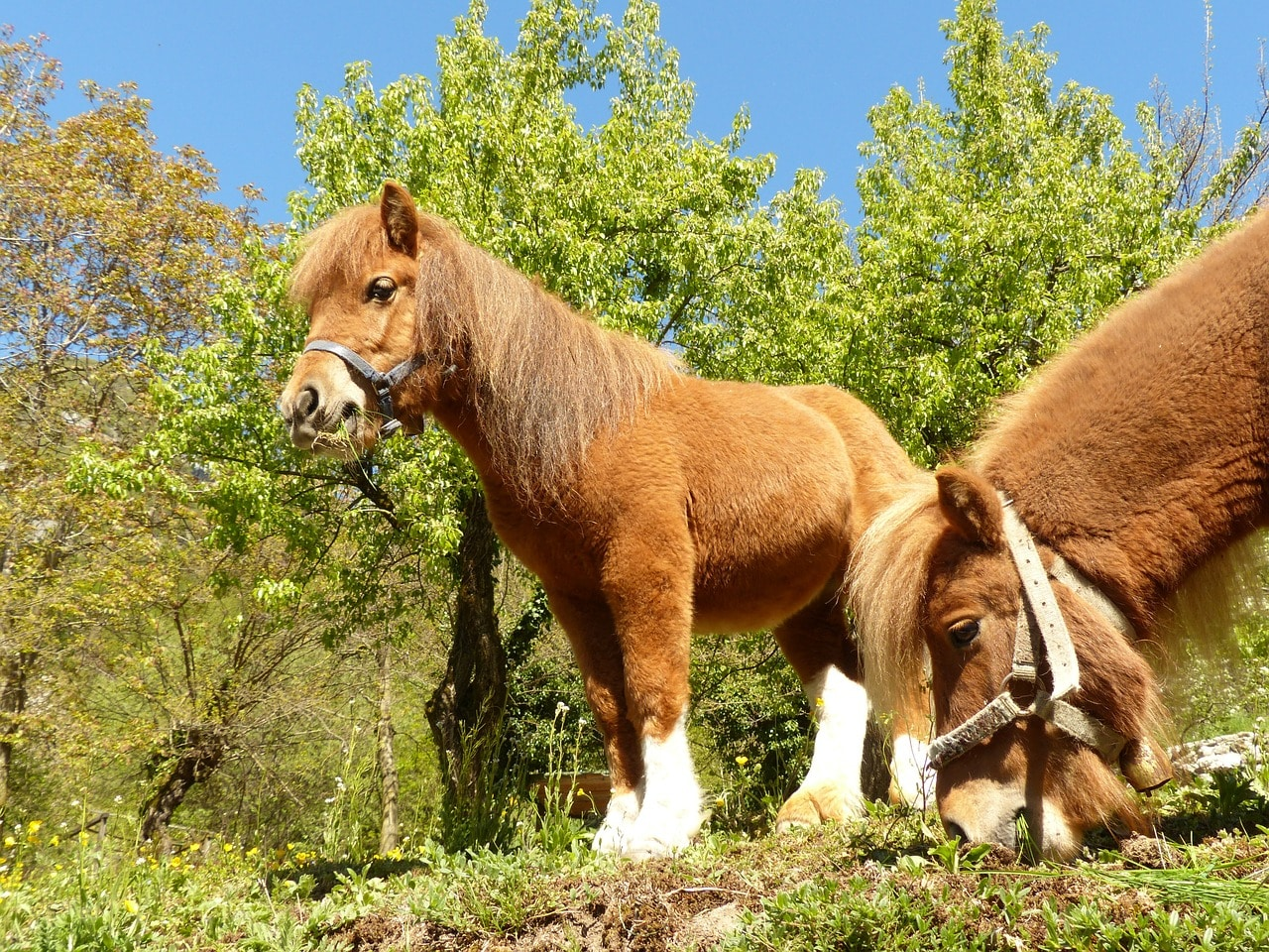 Pony Sensor Traveller Holidays
