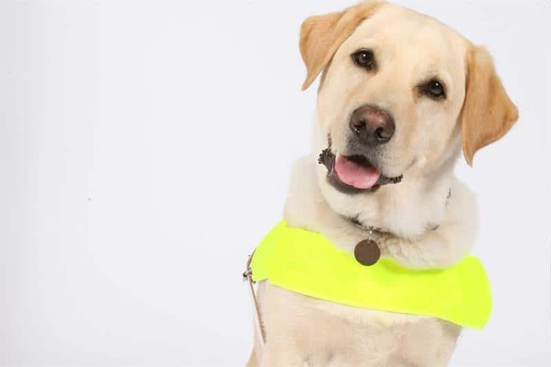 Guide Dog Sensory Traveller Holidays